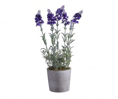Miorice Purple Műnövény virágcserépben