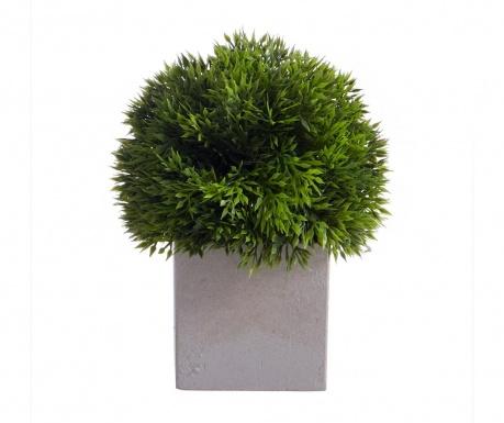 Seto Green Műnövény virágcserépben
