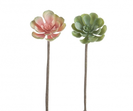 Sada 2 umelých kvetín Succulent Rise
