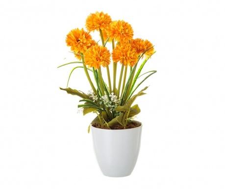 Little Chrysantemum Orange Műnövény virágcserépben