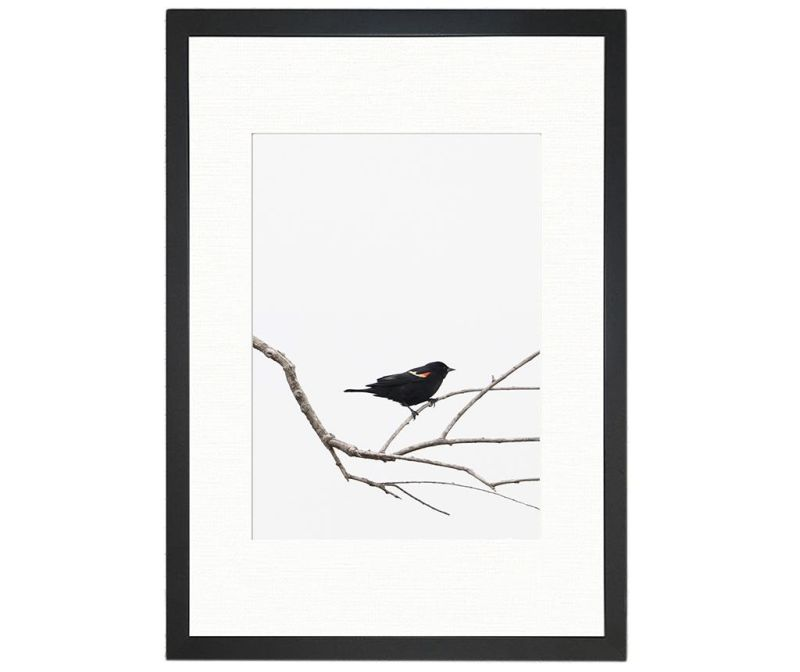 Obraz Bird on the Branch 24x29 cm