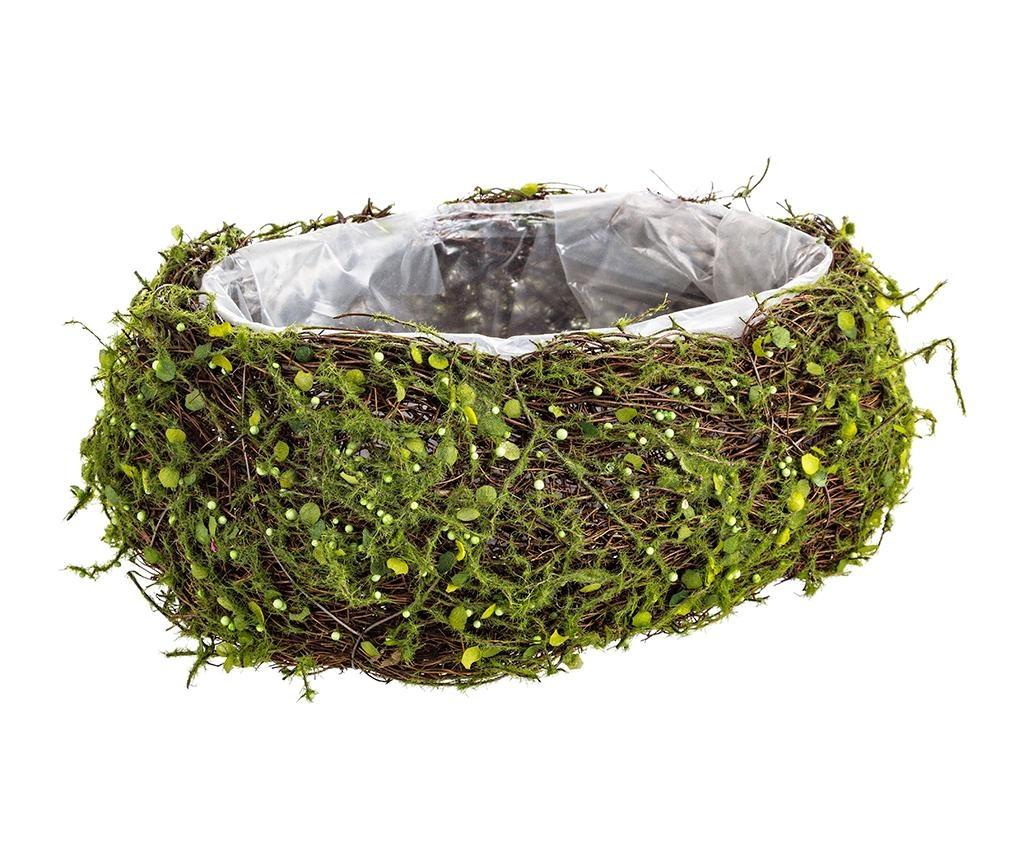 Ghiveci Evergreen