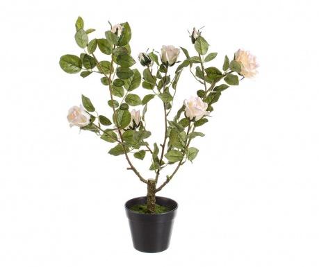 Isabel Műnövény virágcserépben