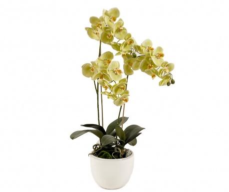 Umělá květina v květináči Phalaenopsis Blume