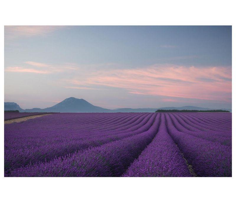 Tablou Purple Field 60x90 cm