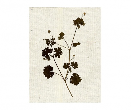 Slika Collect Flower 28.9x39 cm
