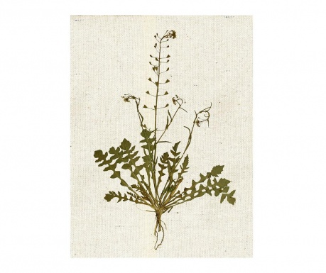 Slika Flowers Collectioner 28.9x39 cm