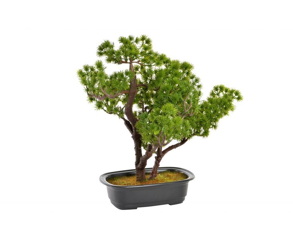 Dekorativna rastlina Bonsai